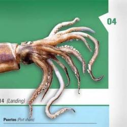 Libros de las especies marinas argentinas. Diseño Editorial